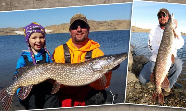 Pike Masters Tournament – Lake Oahe