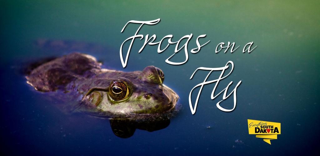 Frogs on a Fly