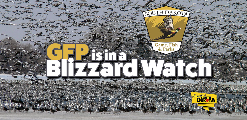 Help the SD Game, Fish and Parks track Snow Geese