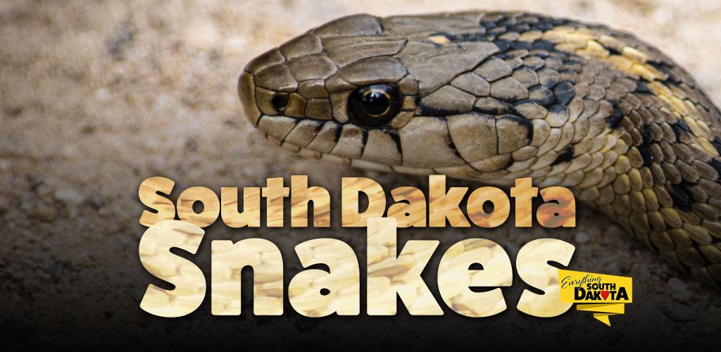 Snakes of South Dakota