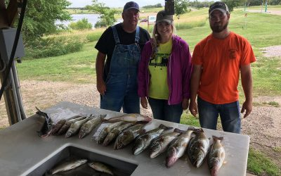 Lake Oahe bite and walleye health continue into August