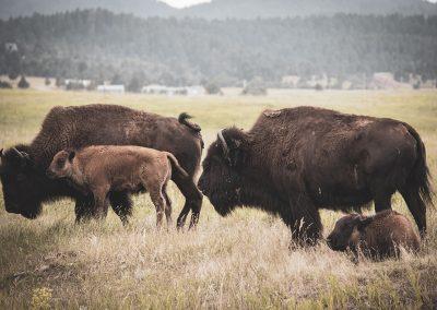bison-moms