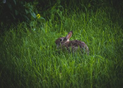 bun-in-grass-web