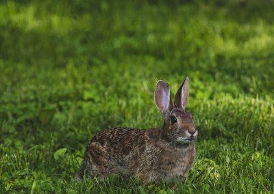 bunny-web