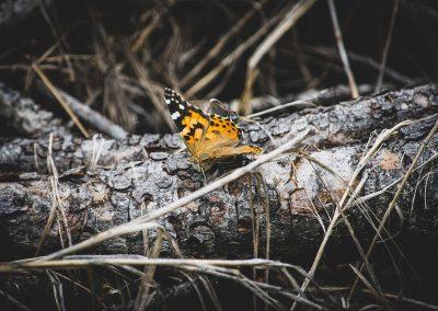 butterfly-log