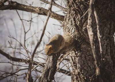 chunky-squirrel-web