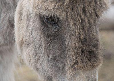 donkey-img1-web