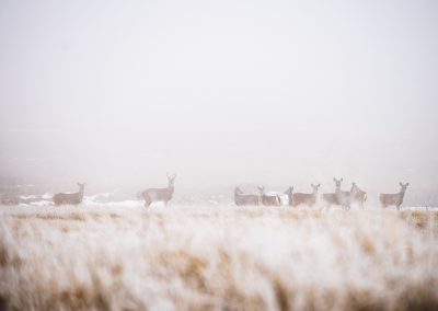 frosty-deer-img2-web