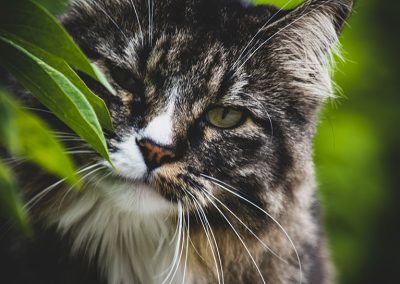 hissing-cat-img2-web