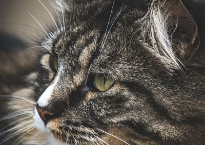 hissing-cat-img4-web