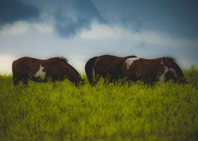 horse-img5-web