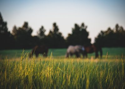 horses-img2-web