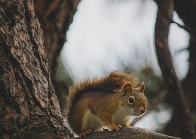 little-squirrel-img2