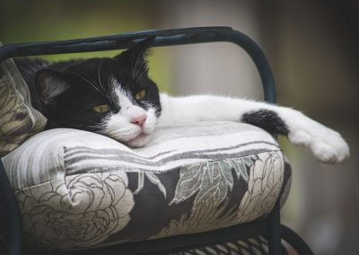 relaxing-cat-img1