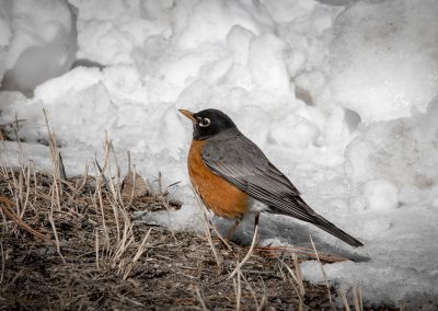 robin-spearfish-canyon-web