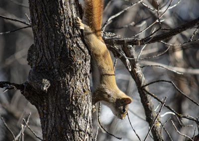 squirrel-img1-web