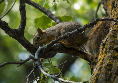 squirrel-web