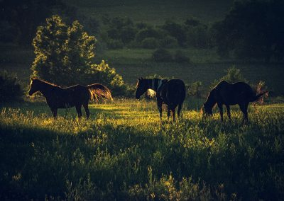 sunset-horses-img1-web