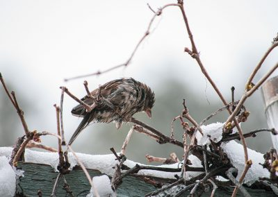 wet-sparrow-web