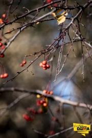 berries-img2