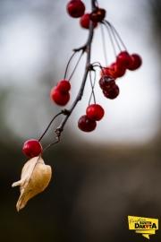 berries-leaf