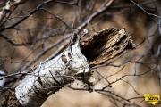 broken-old-branch