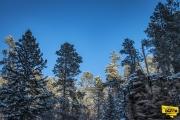 canyon-trees