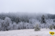 frosted-pine3