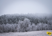 frosted-pine4