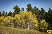 little-spearfish-trail-img4_1