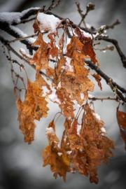 orange-leaves