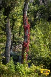 red-vines-lrg
