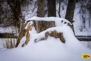 snowy-stump