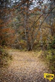 start-of-trail