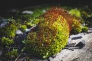 strange-moss-img2