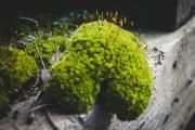 strange-moss-img3