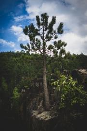 tree-in-rock