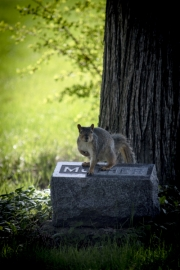 squirrel-mother-headstone